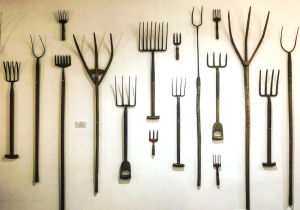 A selection of gardening tools